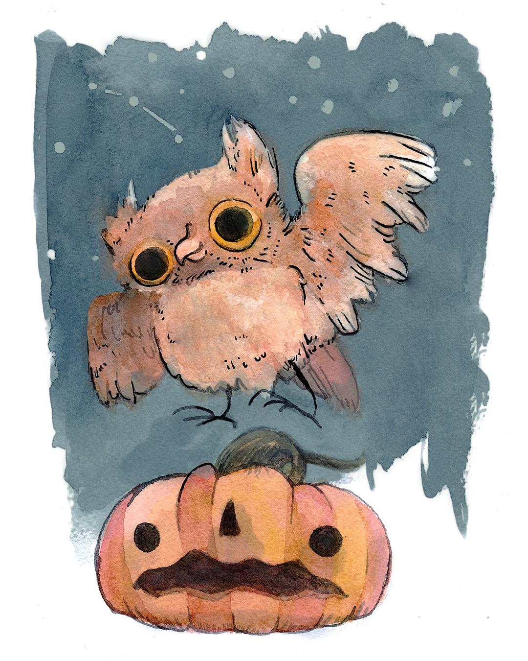 Owl-Night